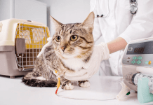 Manfaat Sterilisasi bagi Kucing