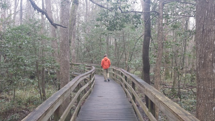 Congaree National Park January 2017