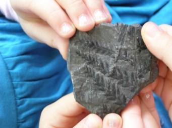 coal stone with plants prints