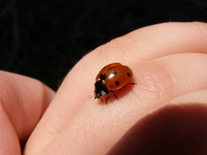 And a ladybird! Fly!!!!