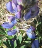 Blue and violet.