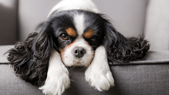 Free Dog Camera for Healthcare Workers