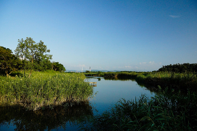 [遊記] 在台北享受大自然,野鳥的棲息地,關渡自然公園