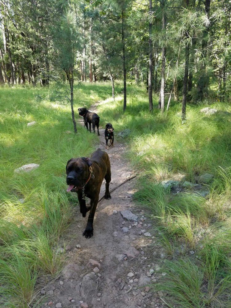 Dogs on Horton Creek Trail