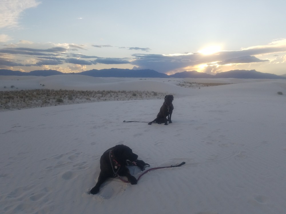 Defeated dogs at White Sands New Mexico
