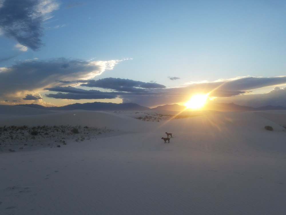 Dogs at sunset White Sands National Monument New Mexico
