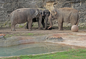 sa-zoo-elephants