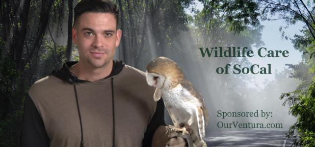 Wildlife Care of SoCal (PSA)