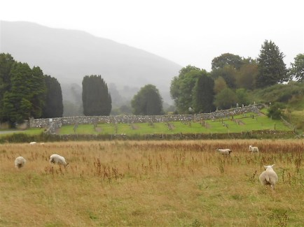 Sheep guarding the old cemetery