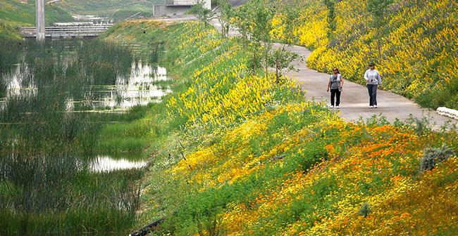 Dominguez Gap Wetlands Project