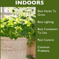 Indoor Herb Garden - Secrets to Growing Herbs Indoors