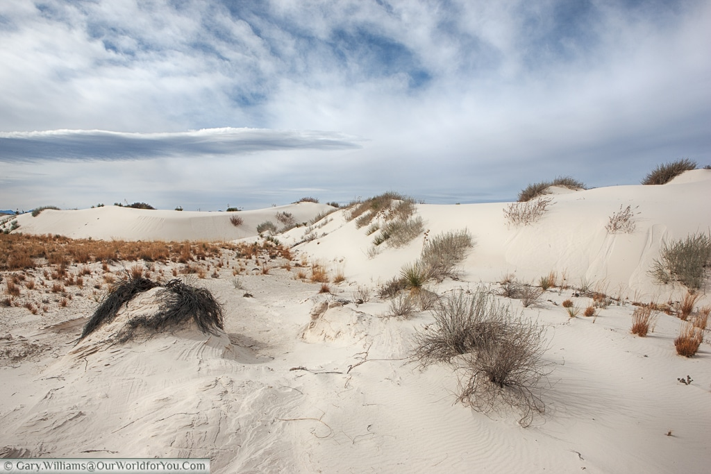 Life still exists at the extremities of the White Sands National Monument, New Mexico