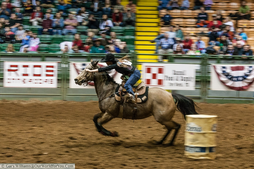 Full speed ahead at the Stockyards Championship Rodeo, Fort Worth, Texas