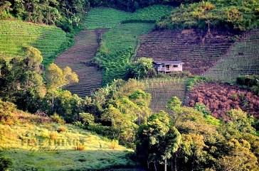 beautiful sight of vegetable gardens as seen from Celyn Resort, Kundasang, Sabah