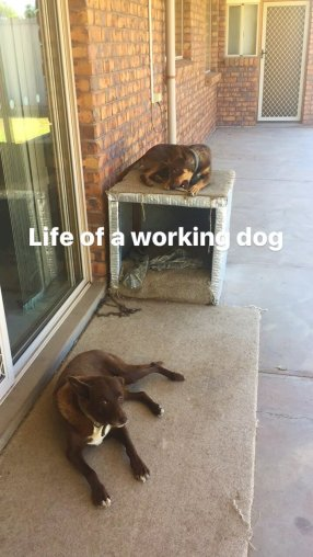 A working dogs life