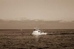 Birds follow this fishing trawler into Long Beach Harbor