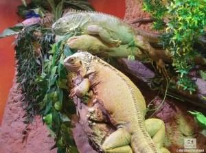 St. Andrews Aquarium Lizards
