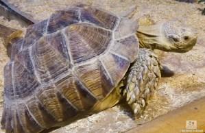St. Andrews Aquarium Tortoise