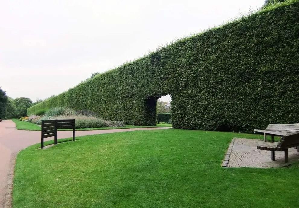 Edinburgh Botanic Gardens (10 of 16)