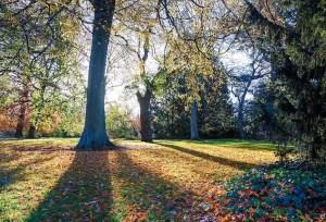 Edinburgh Botanic Gardens (15 of 16)