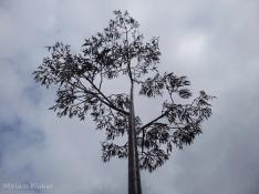 blacksmiths-tree-800x600