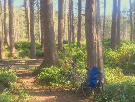 Bike nestled amongst the trees at Cape Lookout State Park