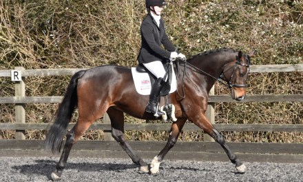 Stilebridge variety proves dressage is an every-horse education