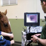 Dietary control of gastric ulcers in horses