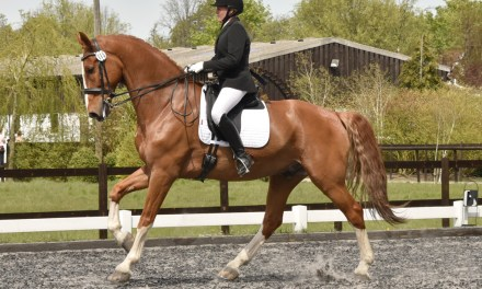 Dressage results: Oldencraig, Surrey 20 May