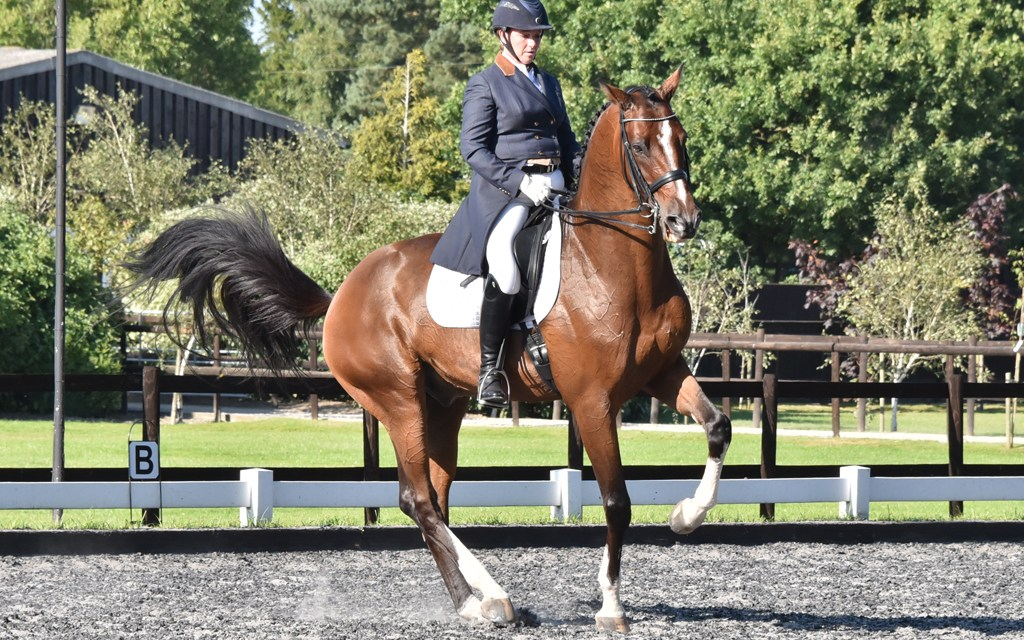 Out and About Dressage reflections…