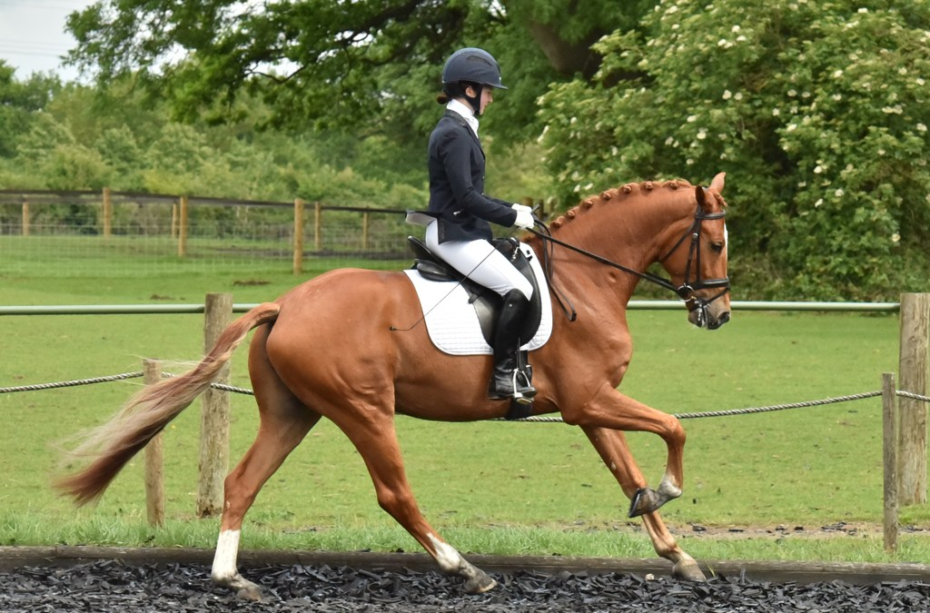 Young horse classes stir strong emotions