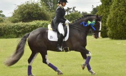 Do the Bronze, Silver and Gold dressage sections work for you?