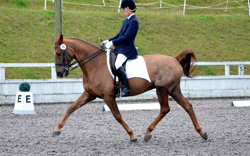 Dressage results: Cobham Manor, Kent, 22 September
