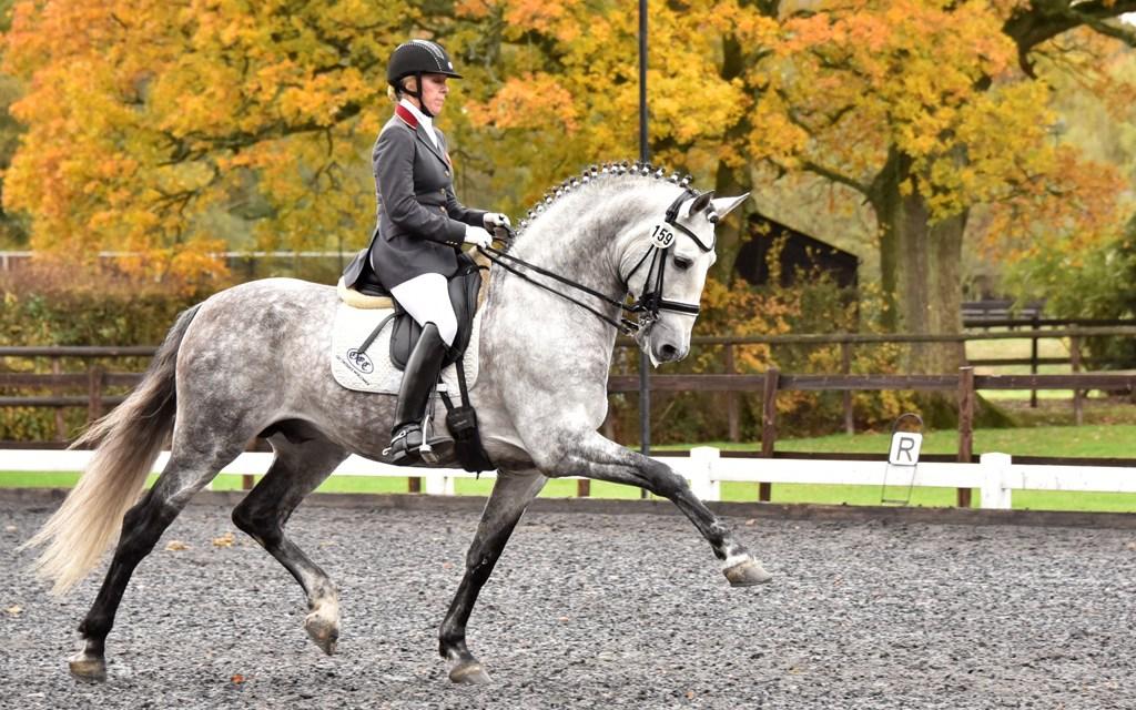 Dressage results: Oldencraig, Surrey, 9 November (Corrected)