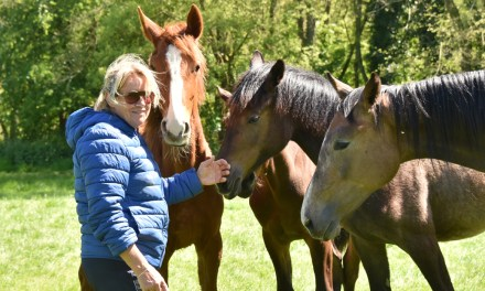 Some dressage riders want warmbloods not hot bloods