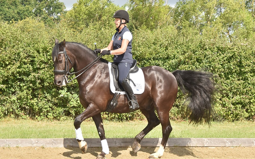 Lynne Walkling and the cob who has made her dream of grand prix