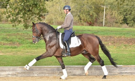Developing Paces and Expression — part 4, Meeting the challenges of grand prix