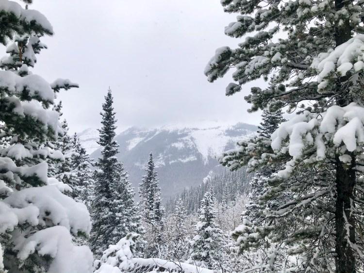 Winter scene in Alberta