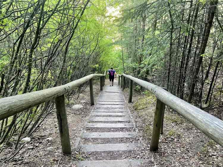 Douglas fir trail last set of stairs