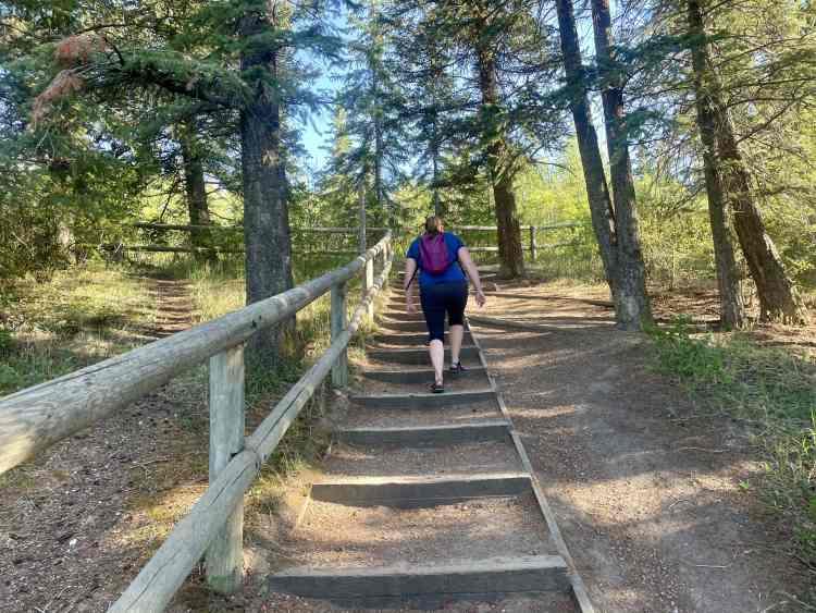 Douglas Fir trail stairs