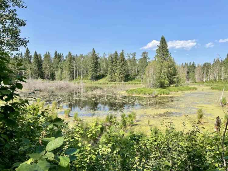 Elk Island hike pond views
