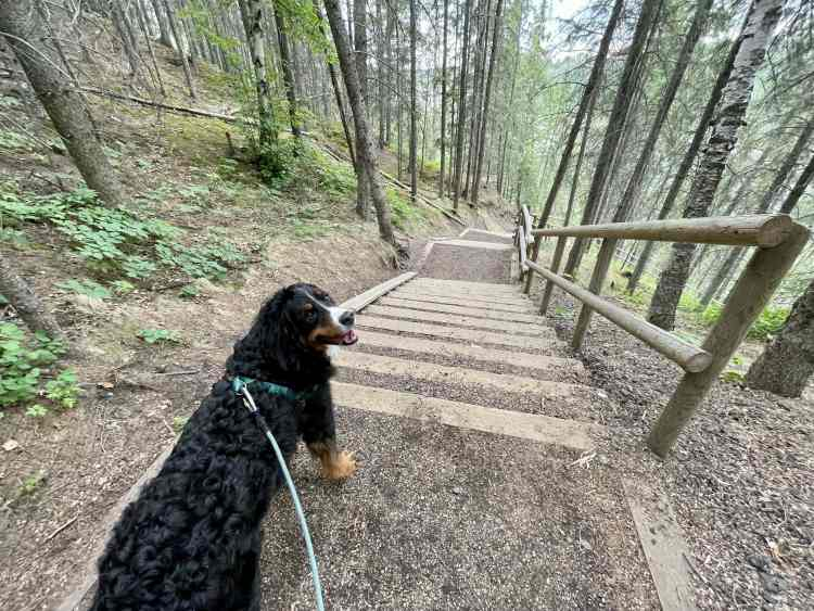 Devon River Valley Trail stairs with dog