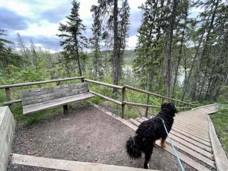 Devon River Valley Trail stairs view