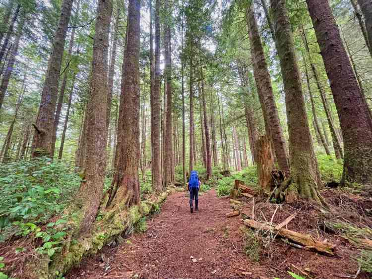 The West Coast Trail forest route