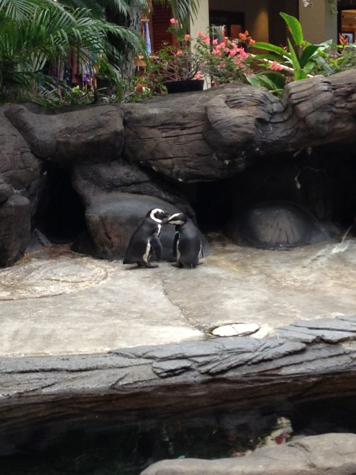 Kissing penguins at the Hilton