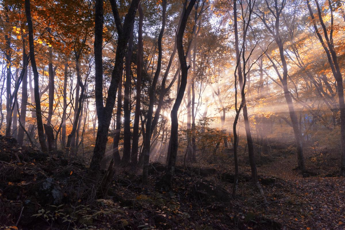 青木ヶ原樹海の紅葉