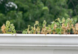 Why clean your gutters? The reasons might surprise you