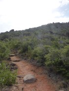 The summit path
