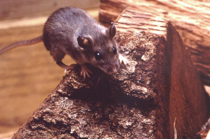 Hantavirus: Two cases reported in King County in recent months ...