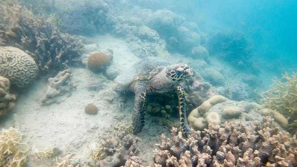 Friendly sea turtle in Butterfly Bay, Whitsundays.
